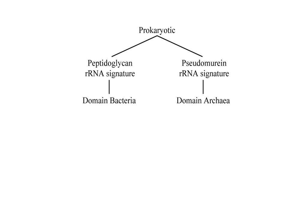Firmicutes Actinobacteria