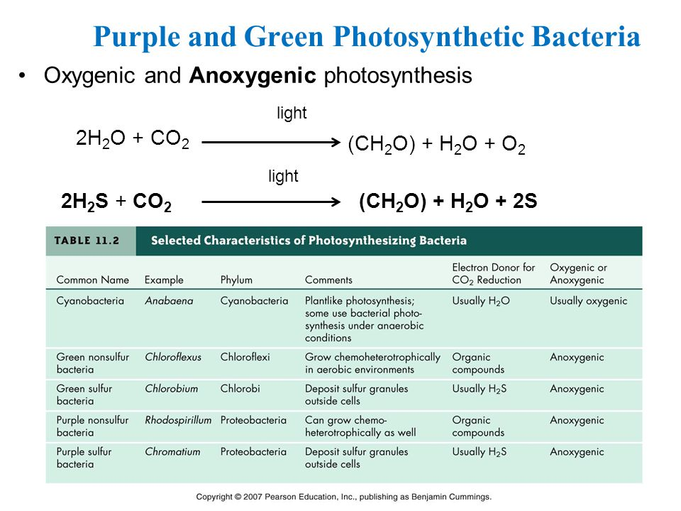 Purple and Green Photosynthetic Bacteria