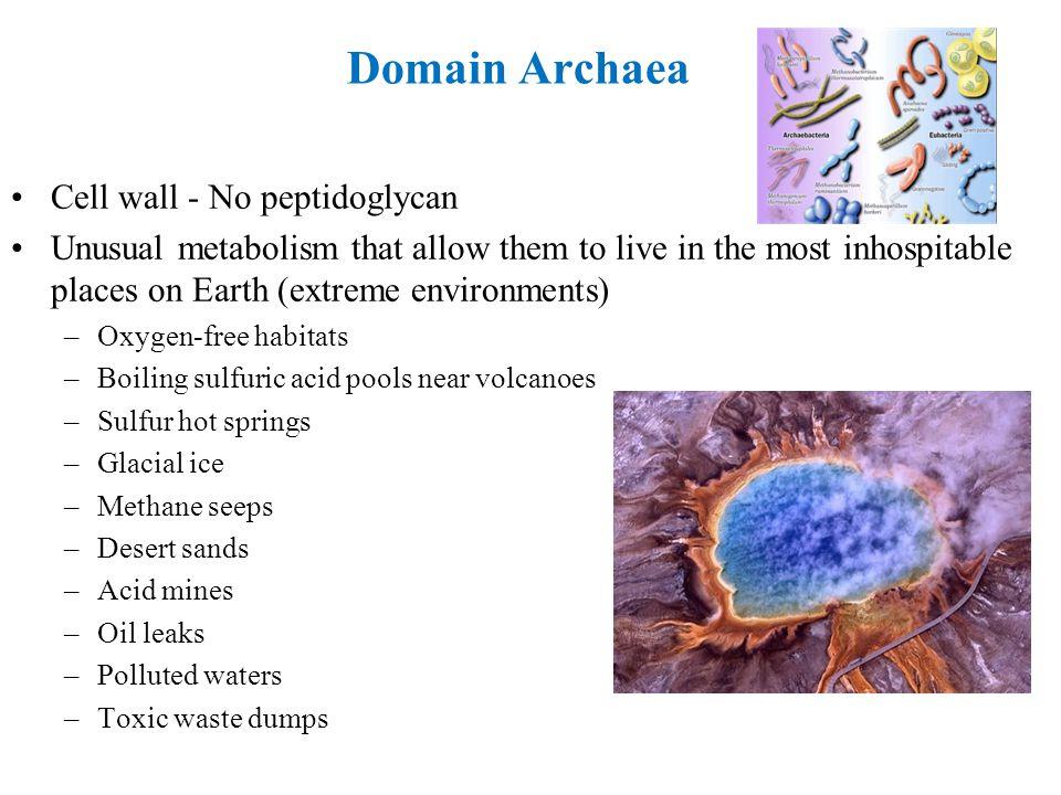 Domain Archaea Cell wall - No peptidoglycan