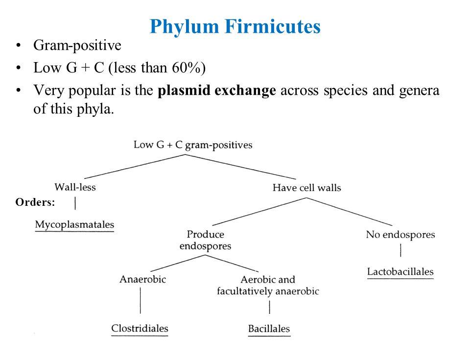 Phylum Firmicutes Gram-positive Low G + C (less than 60%)