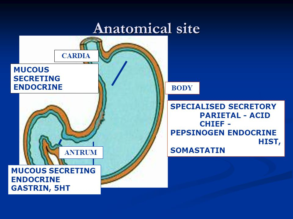 Anatomical site CARDIA MUCOUS SECRETING ENDOCRINE BODY
