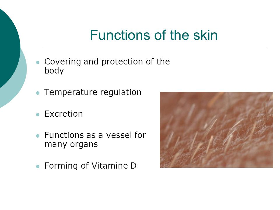 Functions of the skin Covering and protection of the body