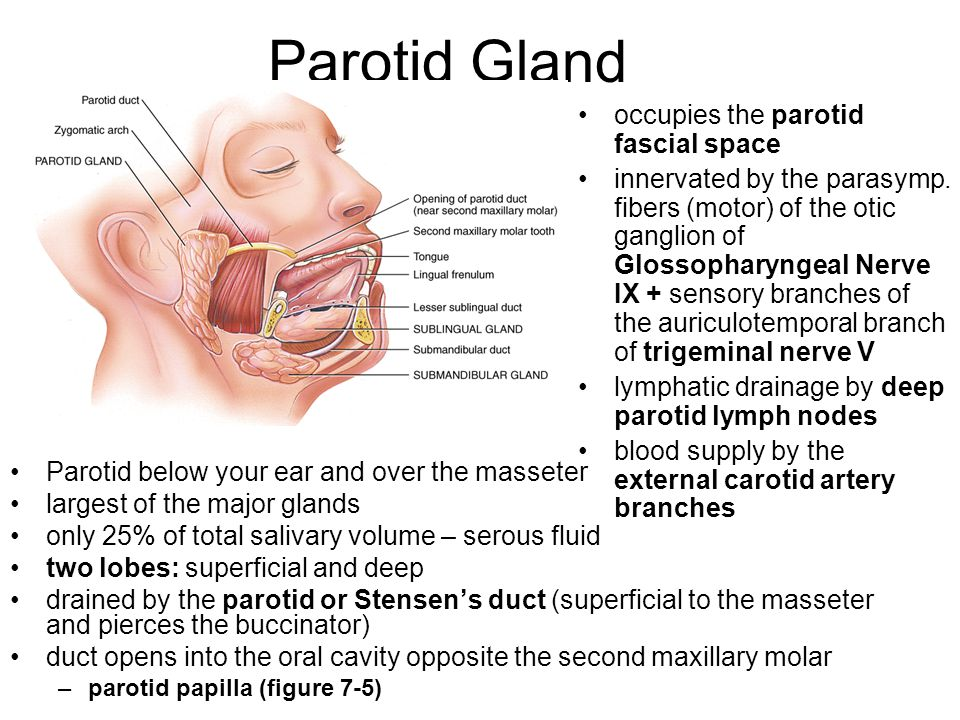 Parotid Gland occupies the parotid fascial space