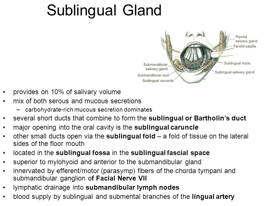 Sublingual Gland provides on 10% of salivary volume