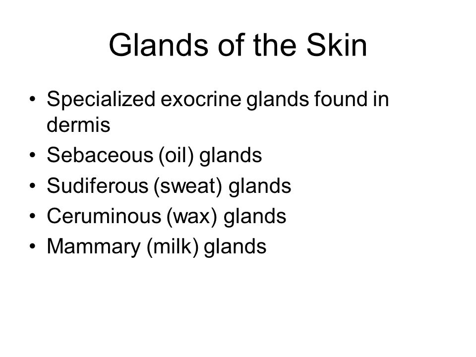 Glands of the Skin Specialized exocrine glands found in dermis