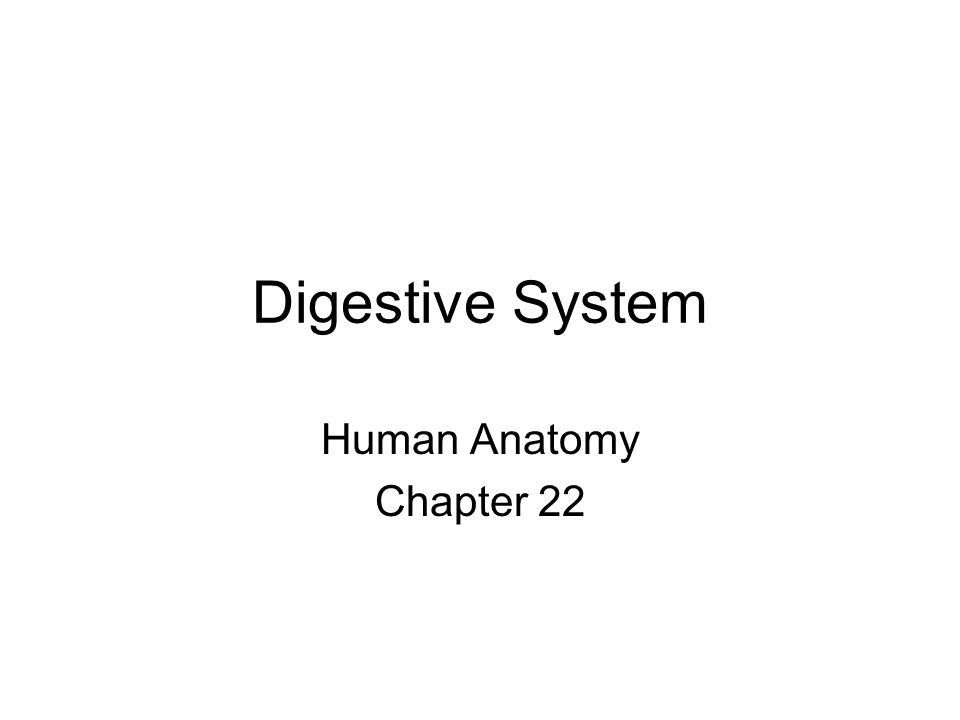 Digestive System Human Anatomy Chapter 22