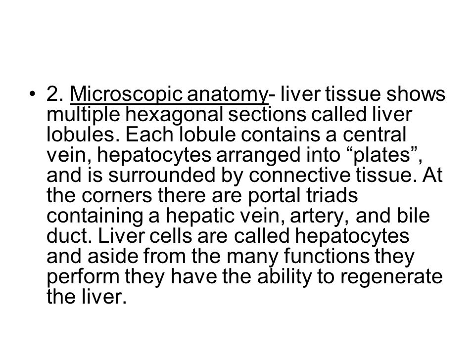 2. Microscopic anatomy- liver tissue shows multiple hexagonal sections called liver lobules.