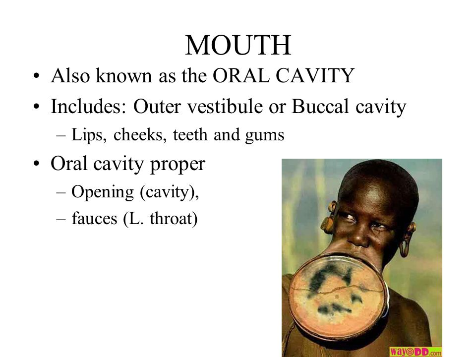 MOUTH Also known as the ORAL CAVITY