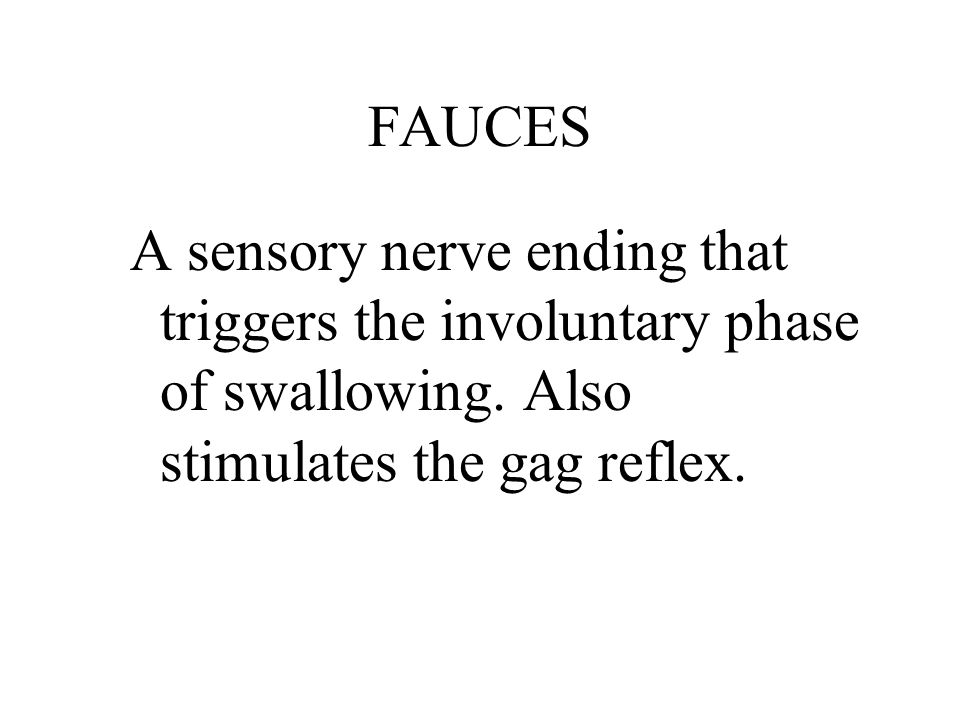 FAUCES A sensory nerve ending that triggers the involuntary phase of swallowing.