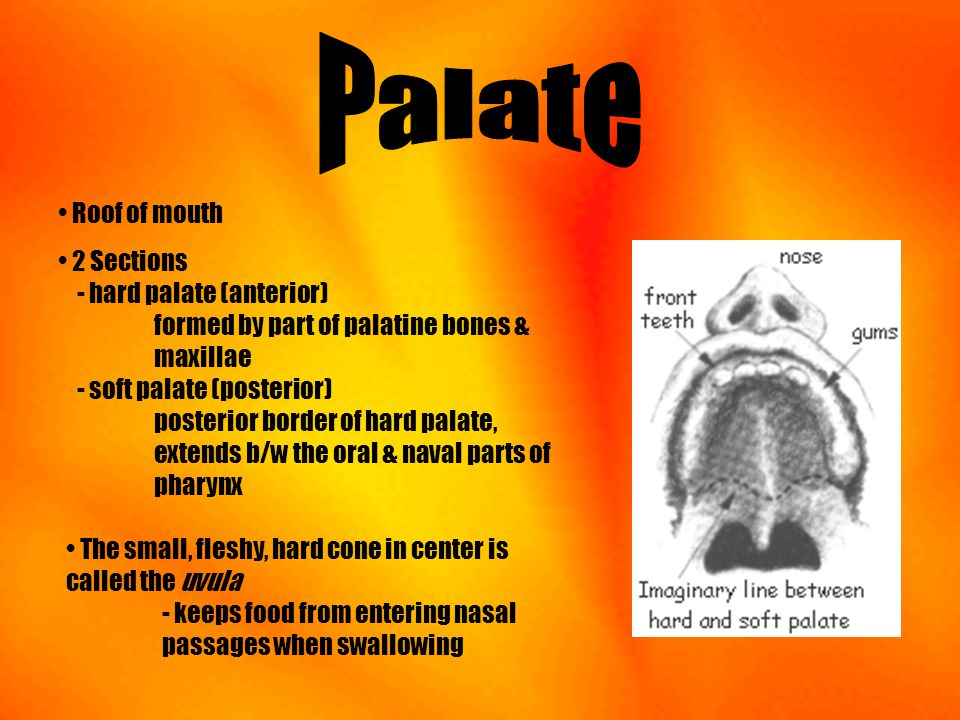 Palate Roof of mouth.