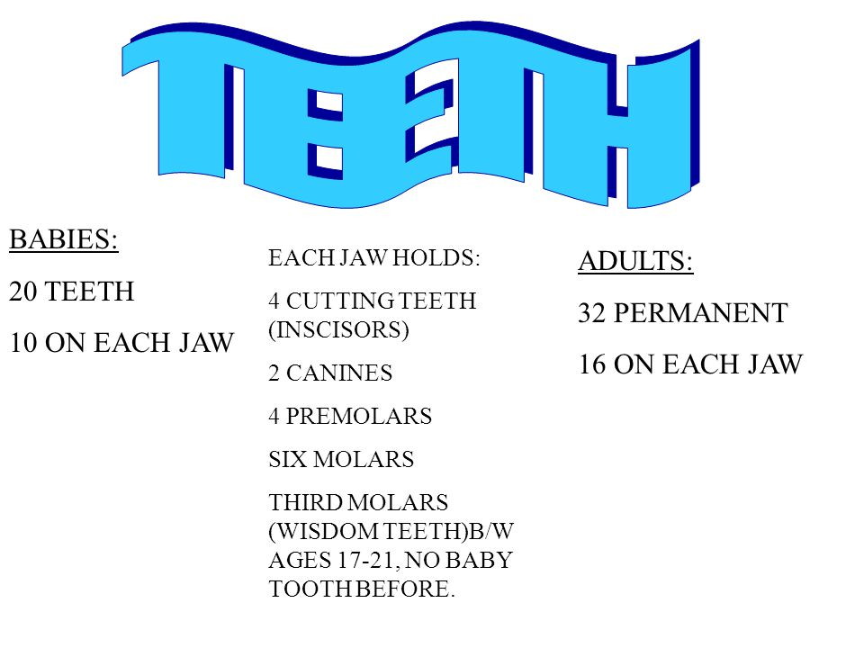 TEETH BABIES: 20 TEETH ADULTS: 32 PERMANENT 10 ON EACH JAW