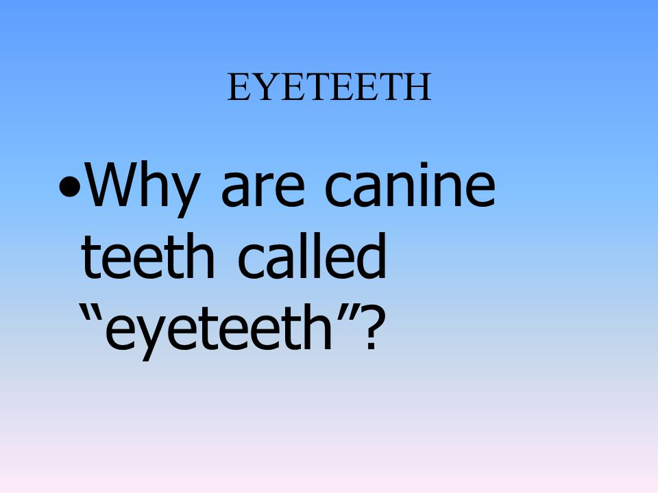 Why are canine teeth called eyeteeth