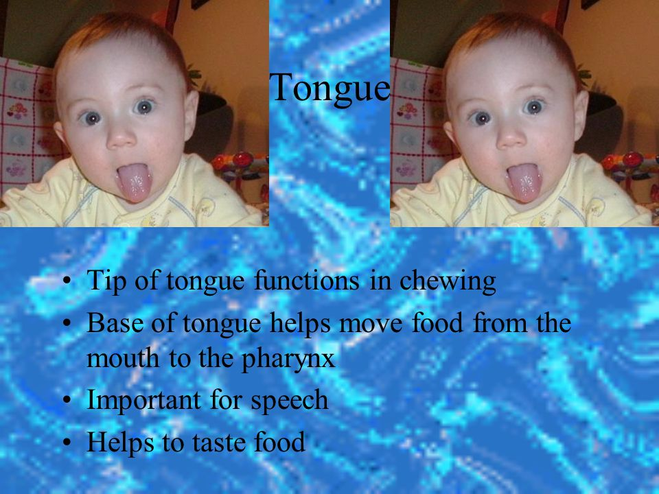 Tongue Tip of tongue functions in chewing