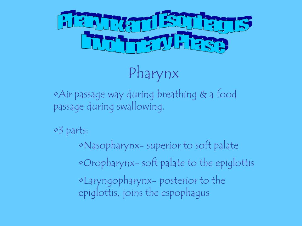 Pharynx and Esophagus Involuntary Phase Pharynx