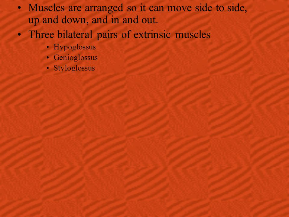 Three bilateral pairs of extrinsic muscles