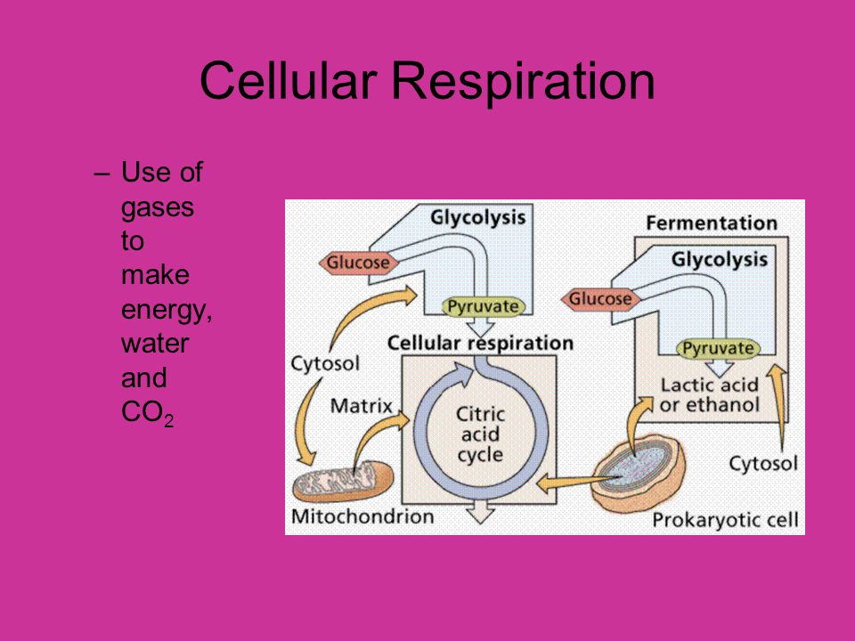 Cellular Respiration Use of gases to make energy, water and CO2