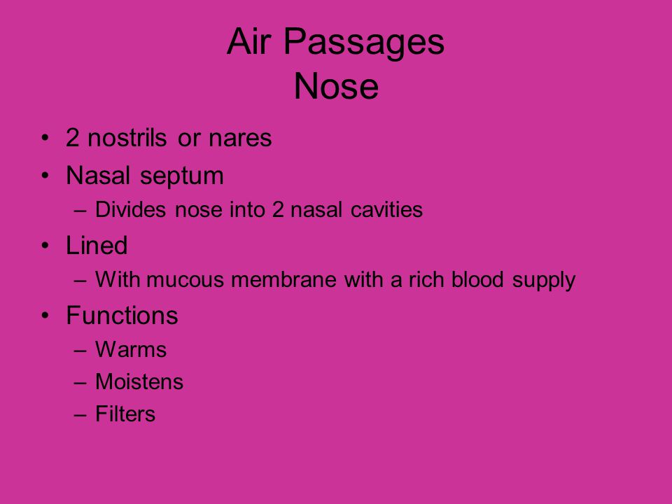 Air Passages Nose 2 nostrils or nares Nasal septum Lined Functions