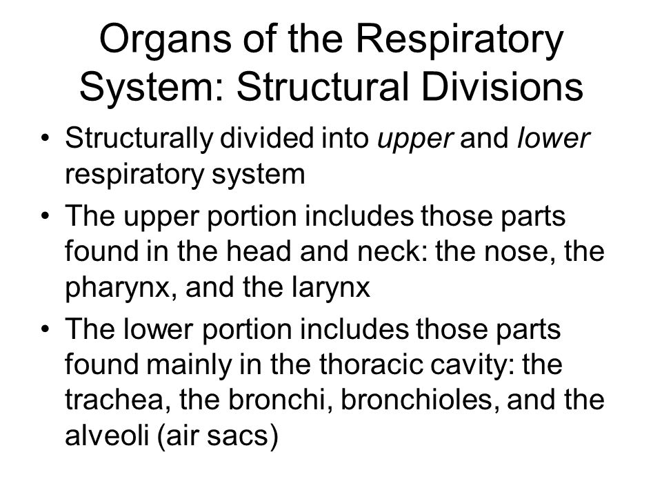 Organs of the Respiratory System: Structural Divisions