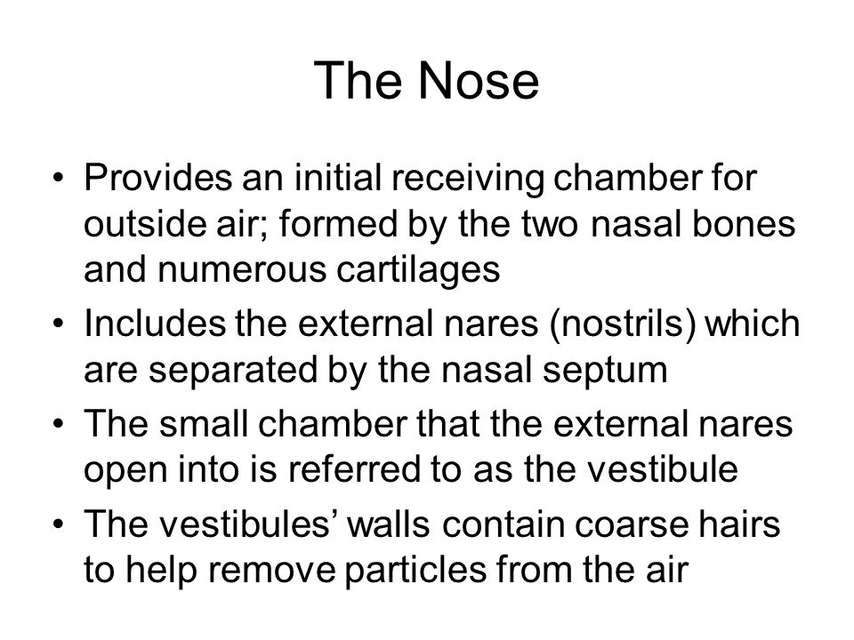 The Nose Provides an initial receiving chamber for outside air; formed by the two nasal bones and numerous cartilages.