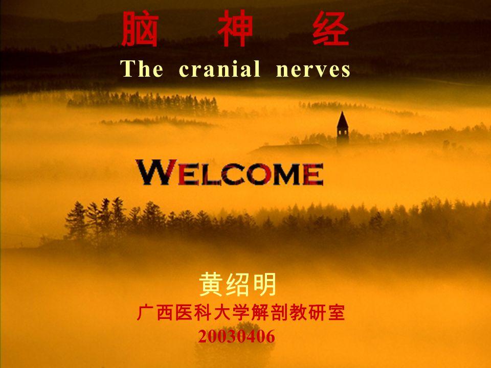 脑神经 The cranial nerves 黄绍明 广西医科大学解剖教研室 20030406