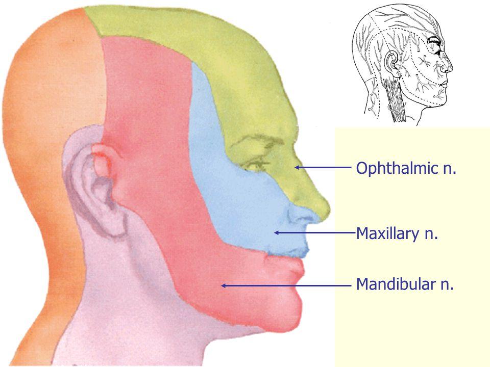 Ophthalmic n. Maxillary n. Mandibular n.