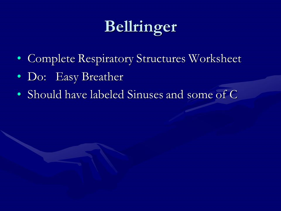 Bellringer Complete Respiratory Structures Worksheet Do: Easy Breather