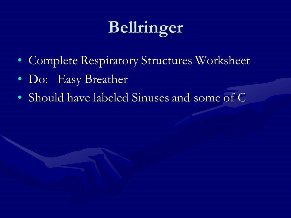 Bellringer Complete Respiratory Structures Worksheet Do: Easy Breather