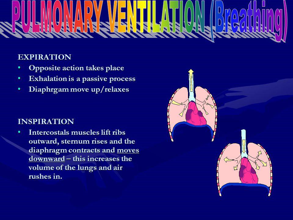 PULMONARY VENTILATION (Breathing)