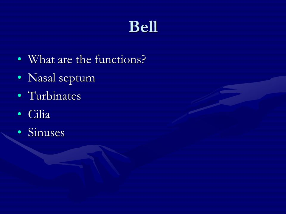 Bell What are the functions Nasal septum Turbinates Cilia Sinuses