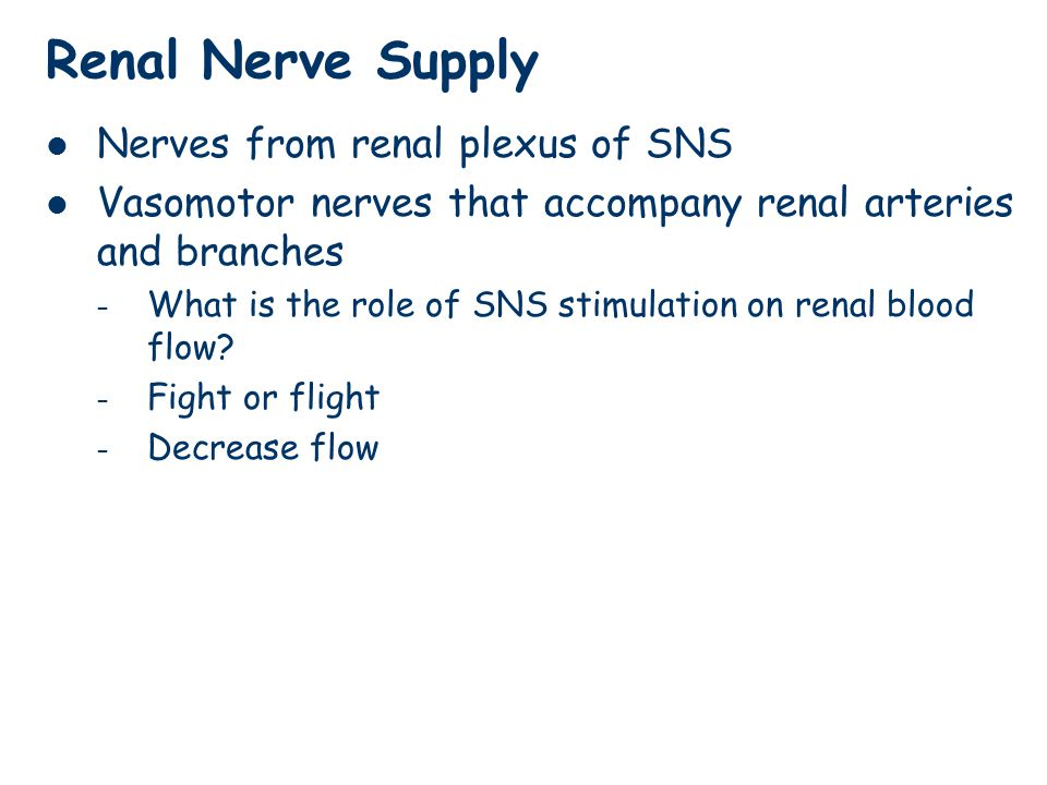 Renal Nerve Supply Nerves from renal plexus of SNS