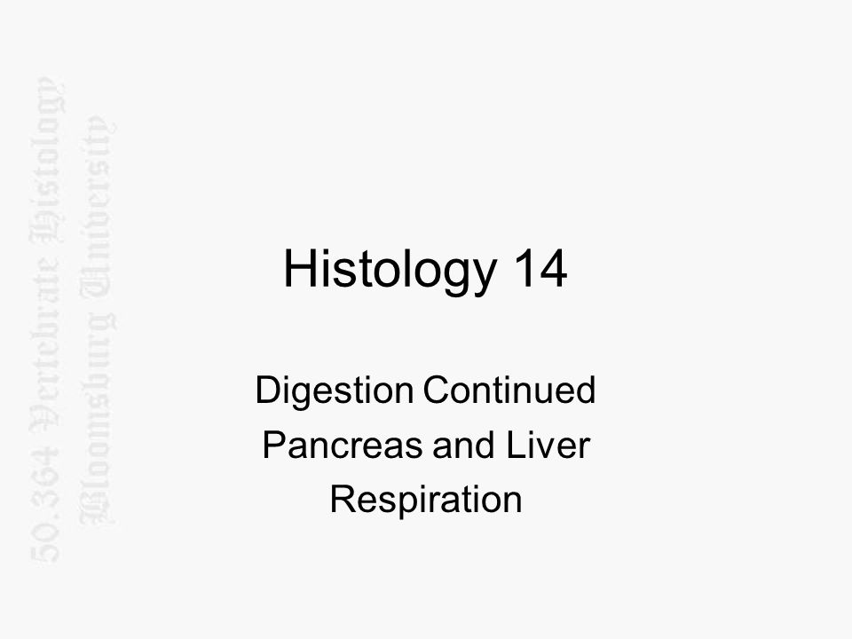 Digestion Continued Pancreas and Liver Respiration