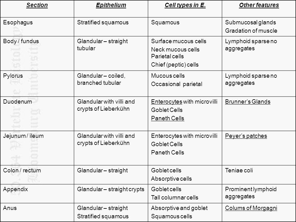 Section Epithelium Cell types in E. Other features