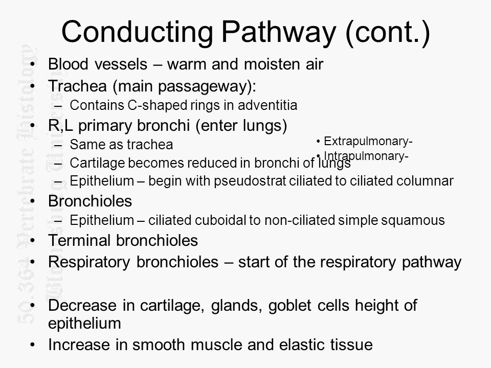 Conducting Pathway (cont.)