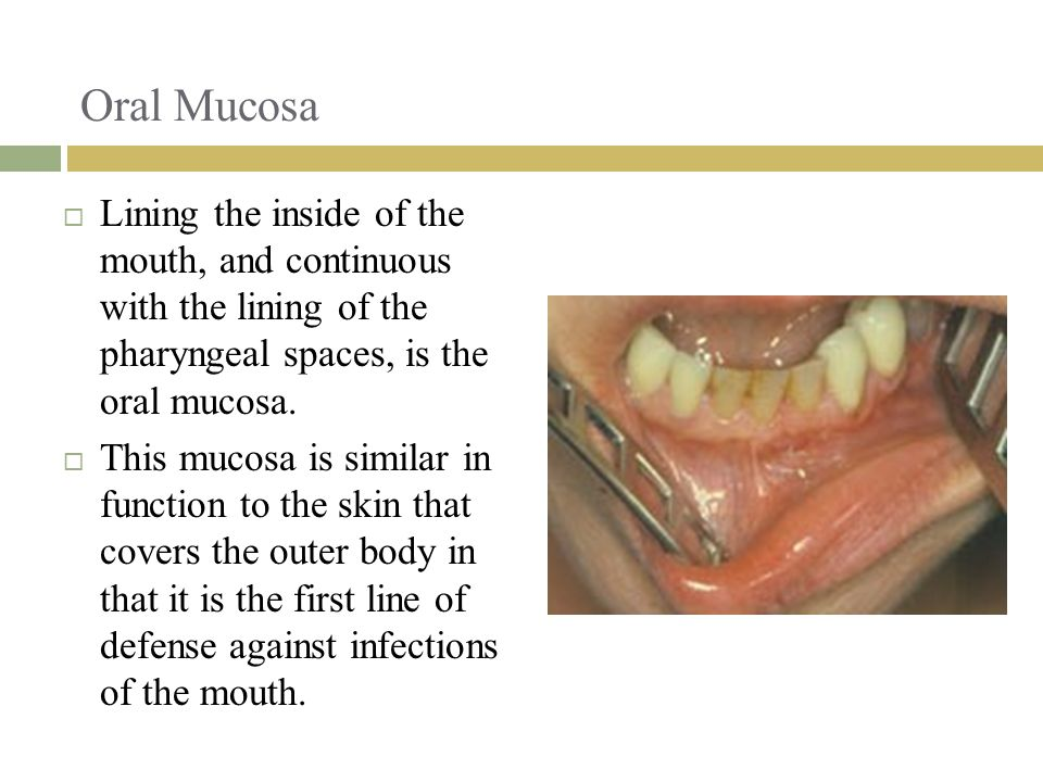 Oral Mucosa Lining the inside of the mouth, and continuous with the lining of the pharyngeal spaces, is the oral mucosa.