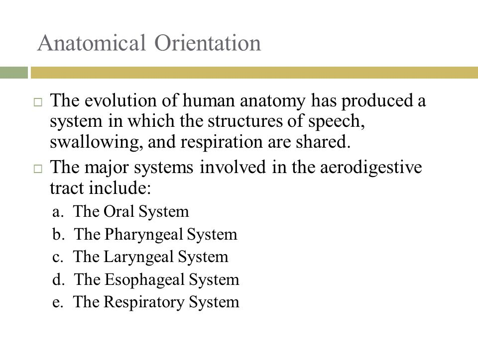 Anatomical Orientation