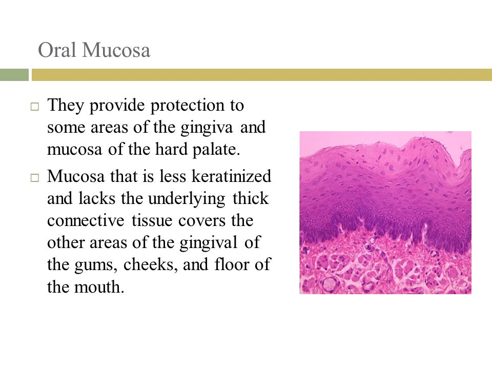 Oral Mucosa They provide protection to some areas of the gingiva and mucosa of the hard palate.