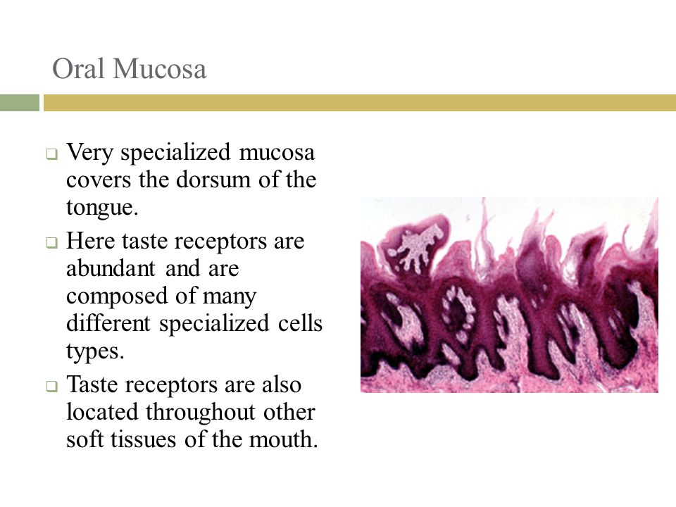 Oral Mucosa Very specialized mucosa covers the dorsum of the tongue.