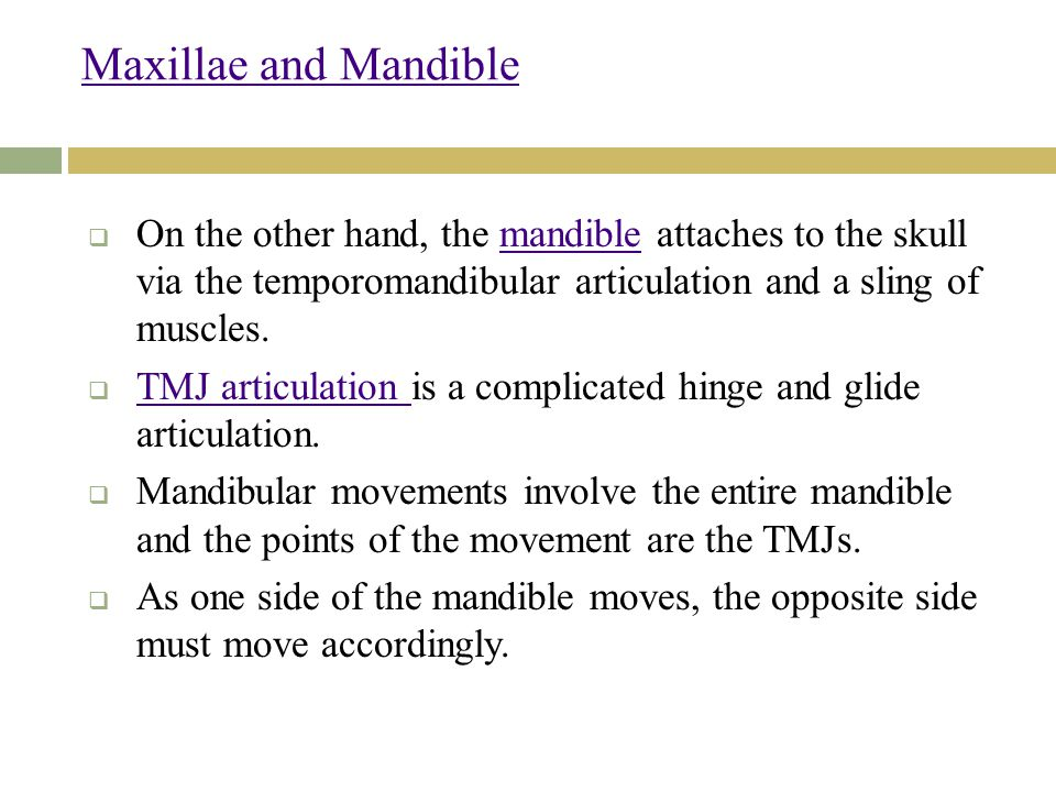 Maxillae and Mandible On the other hand, the mandible attaches to the skull via the temporomandibular articulation and a sling of muscles.