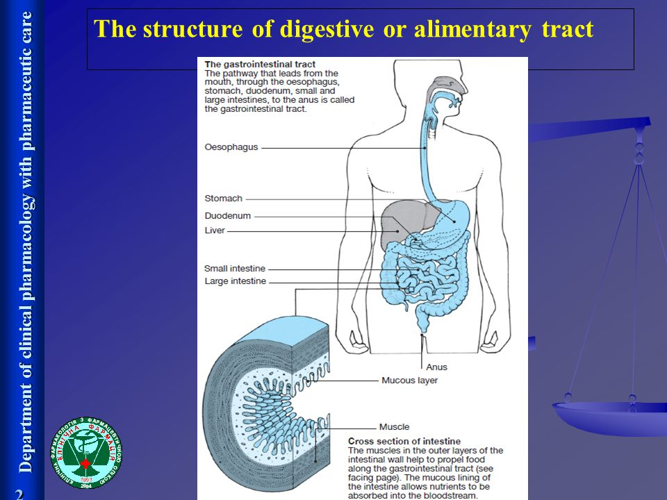 The structure of digestive or alimentary tract