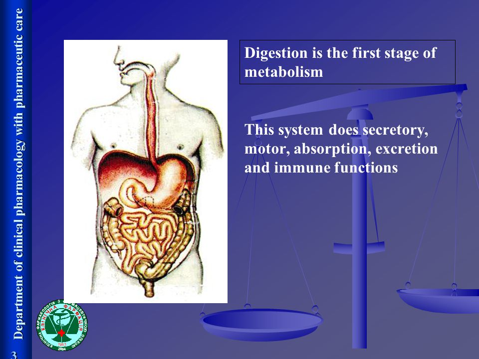 Digestion is the first stage of metabolism