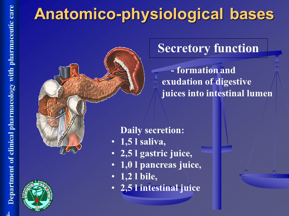 Anatomico-physiological bases