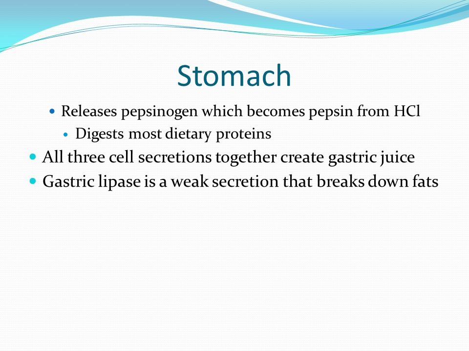 Stomach All three cell secretions together create gastric juice