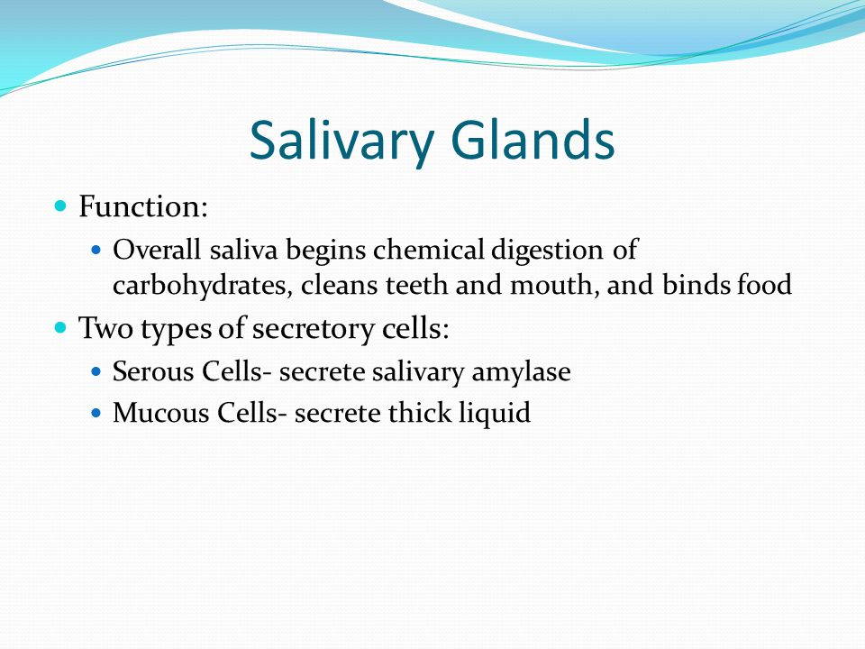 Salivary Glands Function: Two types of secretory cells: