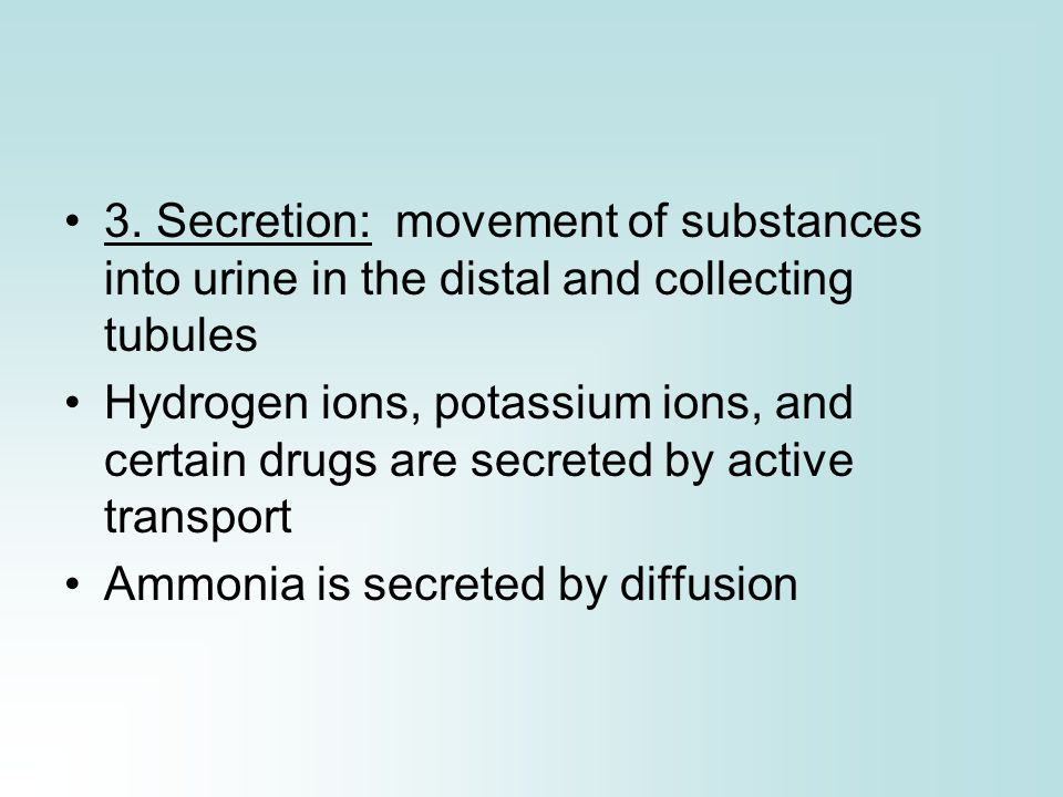 3. Secretion: movement of substances into urine in the distal and collecting tubules