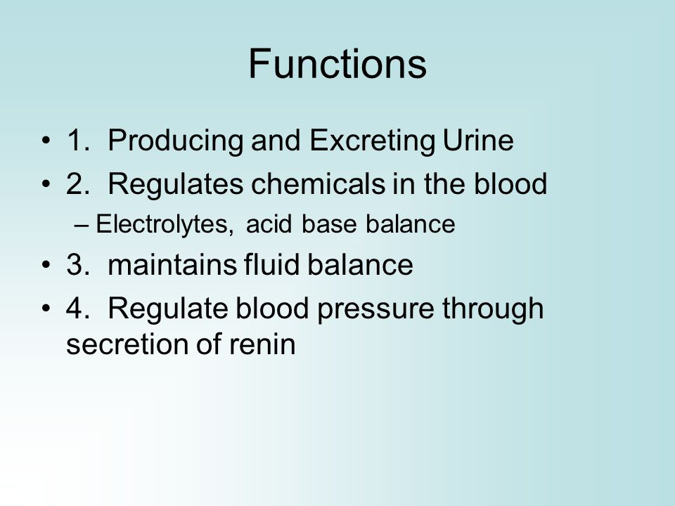Functions 1. Producing and Excreting Urine