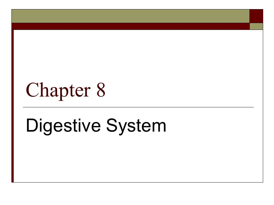 Chapter 8 Digestive System
