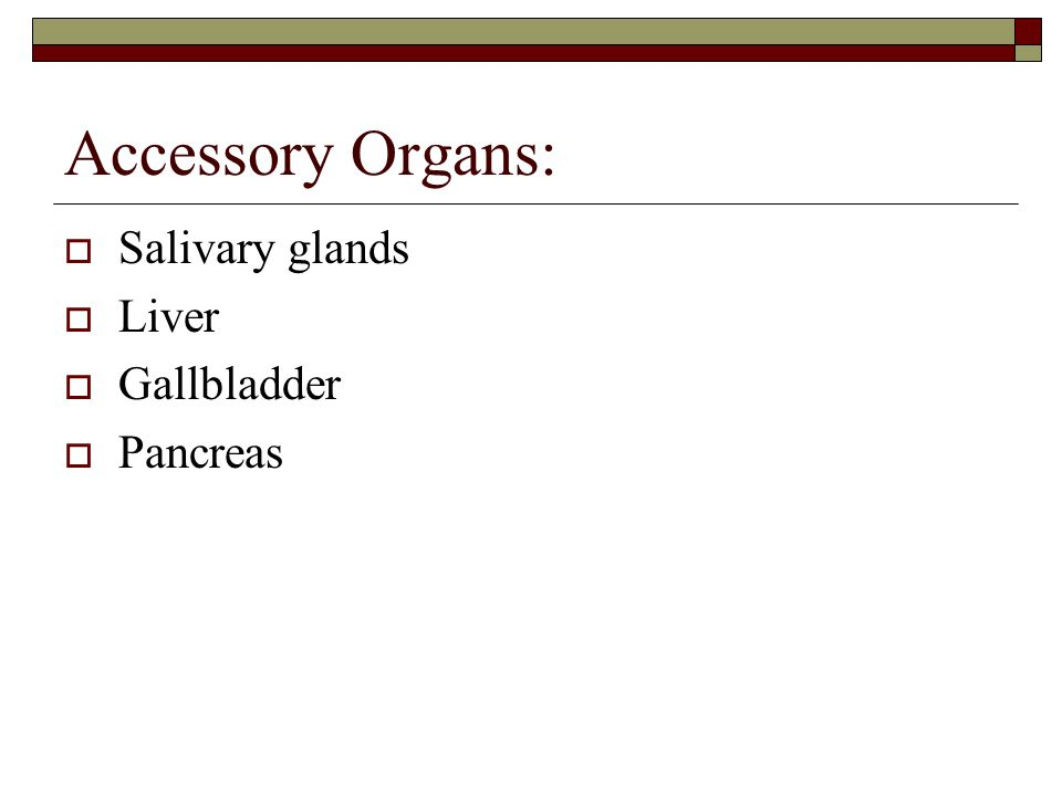 Accessory Organs: Salivary glands Liver Gallbladder Pancreas