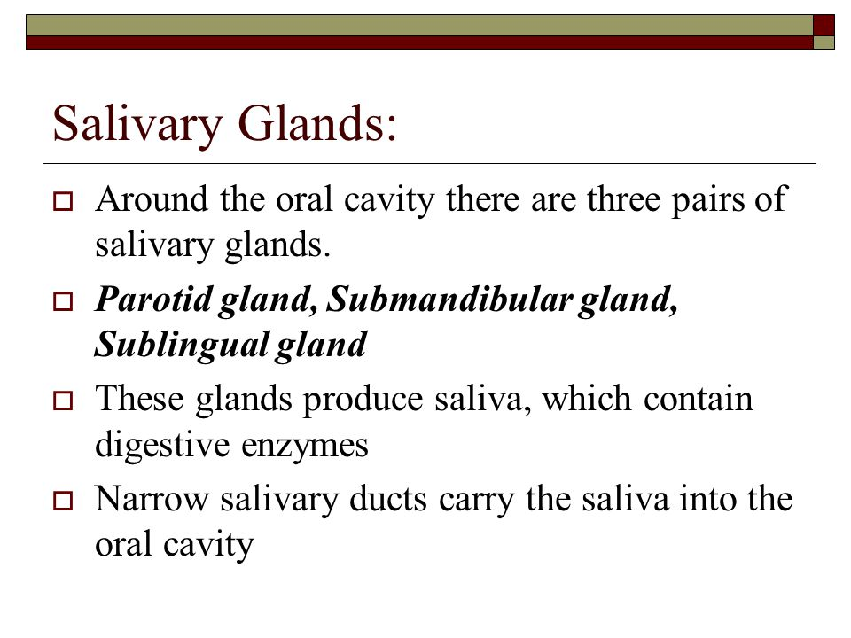 Salivary Glands: Around the oral cavity there are three pairs of salivary glands. Parotid gland, Submandibular gland, Sublingual gland.