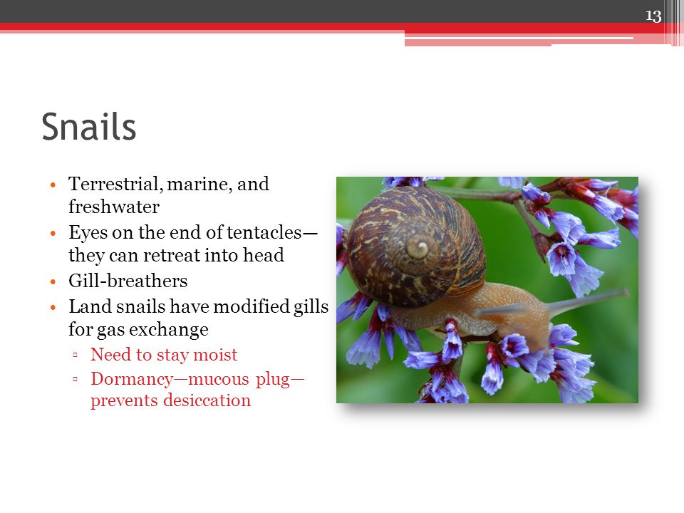 Snails Terrestrial, marine, and freshwater