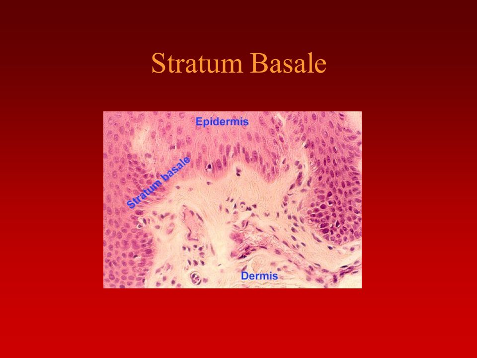 the integumentary system - ppt download, Human Body
